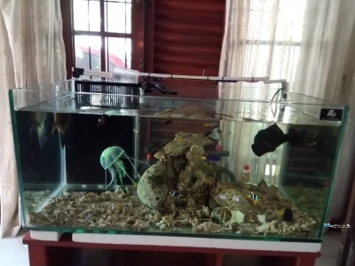 Sea Water Fish Tanks