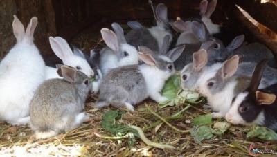 Animal Farming consultancy