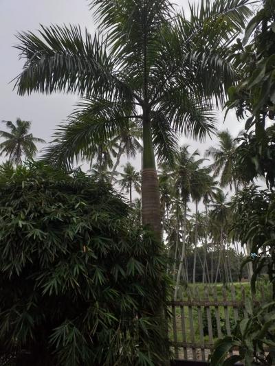 Foxtail Plants