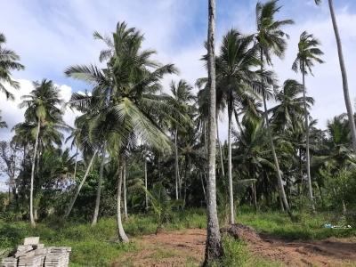 Land for Sale in Kuliyapitiya