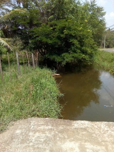 Coconut Land for Rent in Anuradhapura