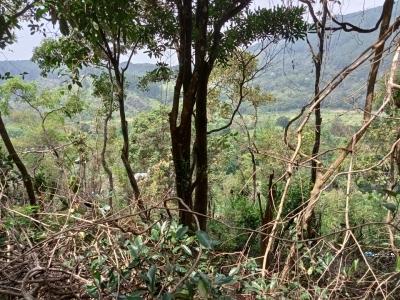Land for sale in Badulla(Kalupahana)