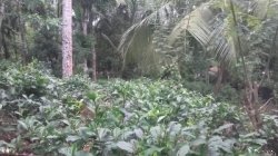 House with Land for Sale in Ahangama