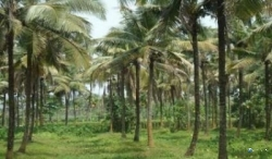 Land for Sale in Embilipitiya