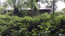 Land for Sale in Deraniyagala