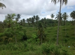 Land for Sale in Mirissa Weligama
