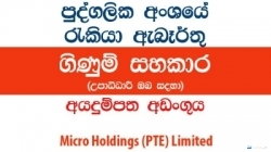 Accounts Assistant – Micro Holdings (PTE) Limited