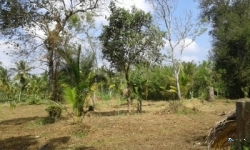 Land for Sale in Narammala