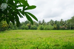 Land for Sale in Kuruwita