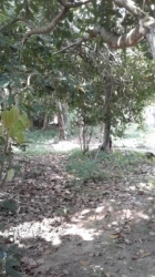 Land for Sale in Benthota