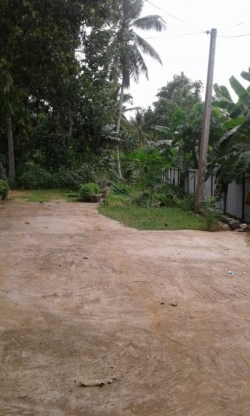 Land for Sale in Kurunegala Pothuhera