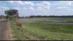 Land for Sale in Anuradhapura(Thantirimale)