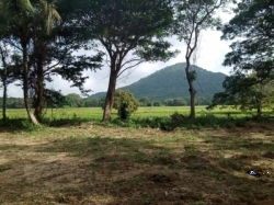 Land for Sale in Hettipola