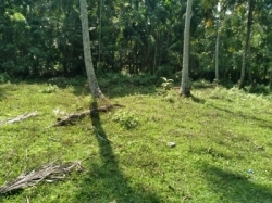 Land for Sale in Beliatta