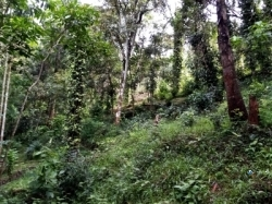 Land for Sale in Haldummulla