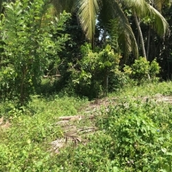 Land for Sale in Hakmana