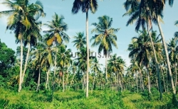 Cocount Land for Sale in Embilipitiya